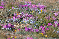 Alpine meadow in the summe Stock Photography