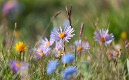Alpine meadow in the summer Stock Photos