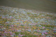 Alpine meadow in the summer Stock Photo