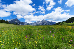 Alpine meadow on a sunnny day with mountain peaks in the background. Austria, Tirol, Walderalm Royalty Free Stock Images