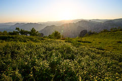 The alpine meadow sunset Stock Image