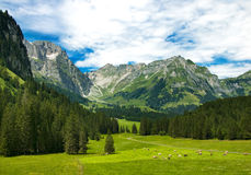 Alpine meadow in Switzerland Stock Photography