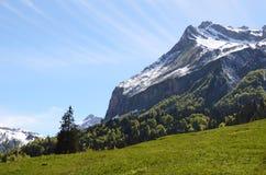 Alpine meadow. Switzerland Royalty Free Stock Photos