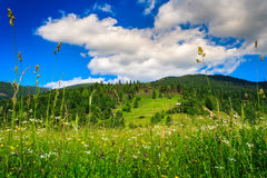 Alpine meadow with tall grass. On a background of mountains Stock Images