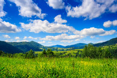 Alpine meadow with tall grass. On a background of mountains Stock Photography