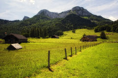 Alpine meadow under Schafberg Royalty Free Stock Photo