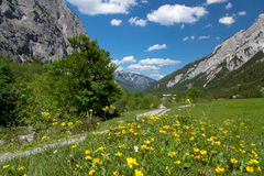 Alpine meadow with wildflowers, Austria Royalty Free Stock Images