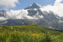 Alpine meadow with yellow flowers Stock Photography
