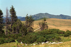 Alpine meadows. From Maramures and Rodnei Mountains Royalty Free Stock Image