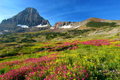 Alpine Meadows Stock Photo