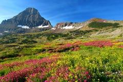 Alpine Meadows. Hidden Lake Trail, Logan Pass, Glacier National Park, Montana, USA Stock Photo