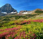 Alpine Meadows. Hidden Lake Trail, Logan Pass, Glacier National Park, Montana, United States Stock Photo