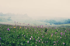 Alpine meadows. In the morning mist Royalty Free Stock Photos