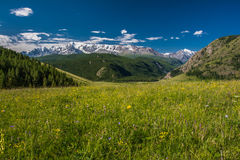 The alpine meadows Stock Images