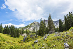 Alpine Meadows at Albion Basin, Utah Stock Image