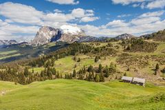 Alpine meadows on the Alpe di Siusi with view to the Plattkofel Royalty Free Stock Image