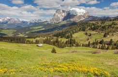 Alpine meadows on the Alpe di Siusi with view to the Plattkofel Stock Photography