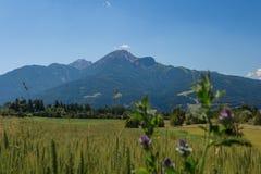 Alpine Meadows. Austrian alpine meadows in the summertime stock photography
