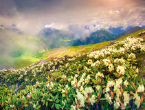 Alpine meadows in the Caucasus mountains. Royalty Free Stock Images