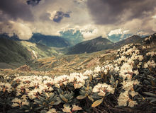 Alpine meadows in the Caucasus mountains. Royalty Free Stock Photography