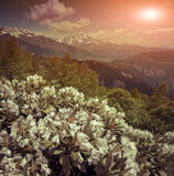 Alpine meadows in the Caucasus mountains. Royalty Free Stock Image
