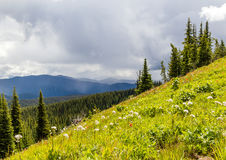 Alpine meadows Manning park Canada scenery in summer Stock Photography