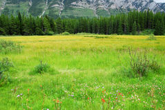 Alpine meadows and mountains Stock Photos