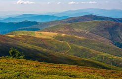 Alpine meadows over the flat mountain ridge. Grassy alpine meadows over the flat mountain ridge. Wonderful evening weather with blue sky and some clouds Stock Images