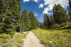 Alpine Meadows path at Albion Basin, Utah Stock Image