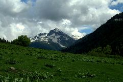 Alpine meadows Stock Photography