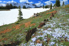 Alpine meadows in Wyoming stock photography