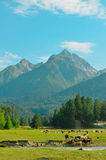 Alpine mountain. And green meadow Stock Photography