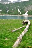 Alpine mountain lake tree trunk Royalty Free Stock Images
