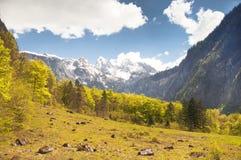 Alpine mountain pasture Royalty Free Stock Image