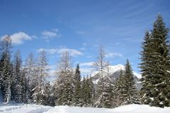 Alpine mountain treeline Stock Photo