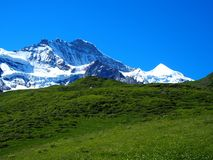 Alpine mountains range landscape near GRINDELWALD village in beauty Swiss ALPS in SWITZERLAND. With snow covered peaks, grassy fields and clear blue sky in 2016 Stock Photography