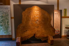 The Alpine Museum Chamaecyparis tree rings show the proposed intent. Alishan, Chiayi City, Taiwan red cypress tree museum exhibition intends intent rings stock photo