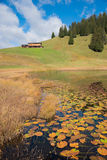 Alpine nature protection area with moor lake in autumn Royalty Free Stock Images