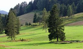 Alpine panorama with firs and pines in the enchanted Valley at t Royalty Free Stock Photo