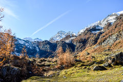 Alpine panorama in mountain forest with blue sky and red trees during autumn Stock Photo