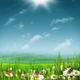 Alpine pastoral landscape. With beauty daisy flowers under bright summer sun stock photography