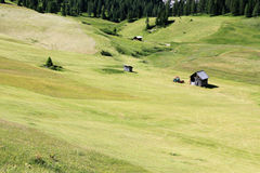 Alpine pasture Royalty Free Stock Image