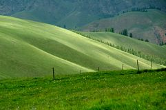 Alpine pasture. And the mountain Stock Photos