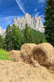Alpine pasture in Dolomites Stock Photo