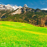 Alpine Pasture Royalty Free Stock Photography