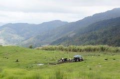 Alpine pasture Royalty Free Stock Photo