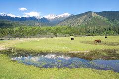 Alpine pasture Royalty Free Stock Photos