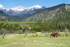 Alpine pasture Stock Photography