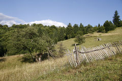 Alpine pasture near the forest Royalty Free Stock Photography