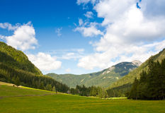 Alpine pasture in spring Royalty Free Stock Image